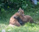 Garden Fox Watch: Mutual support