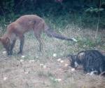 Garden Fox Watch: Nom nom