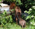 Garden Fox Watch: Following