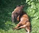 Garden Fox Watch: Mum, the climbing frame